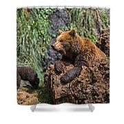 Eurasian Brown Bear 8 Shower Curtain