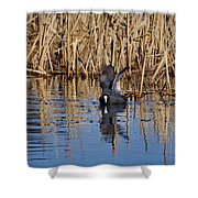 Eurasian Coot And The Bubles Shower Curtain