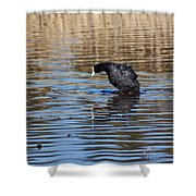 Eurasian Coot Shower Curtain
