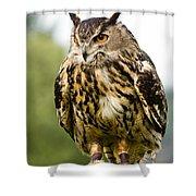 Eurasian Eagle Owl On Log Shower Curtain