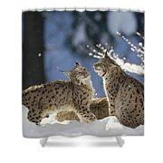 Eurasian Lynx Pair Bayerischer Wald Np Shower Curtain