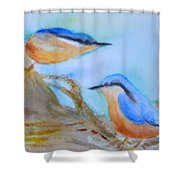 Eurasian Nuthatch Shower Curtain