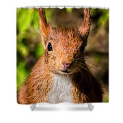 Eurasian Red Squirrel Shower Curtain