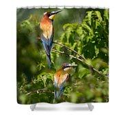 European Bee-eater Shower Curtain