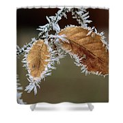 European Beech Leaves With Frost Shower Curtain