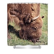 European Bison  Bison Bonasus Shower Curtain