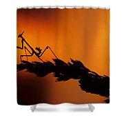 European Devil Mantis Shower Curtain
