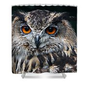European Eagle Owl  Shower Curtain