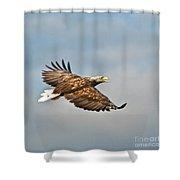 European Flying Sea Eagle 3 Shower Curtain