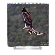 European Flying Sea Eagle 4 Shower Curtain