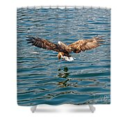 European Flying Sea Eagle 6 Shower Curtain