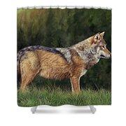 European Grey Wolf Shower Curtain