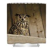 European Owl Shower Curtain