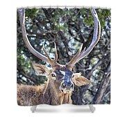 European Red Deer Shower Curtain