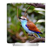 European Roller Shower Curtain