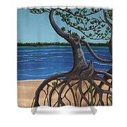 Evans Landing Mangroves Shower Curtain