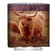Even Cape Breton Cattle Have Character Shower Curtain