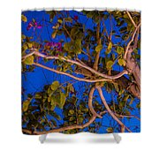 Evening Blues Shower Curtain