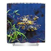 Evening Encloses The Aging Lily Pad Shower Curtain