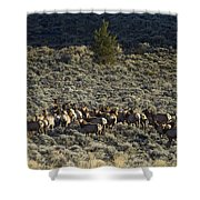 Evening Herd Of Elk   #7640 Shower Curtain