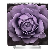Evening Lavender Rose Flower Shower Curtain