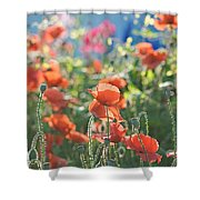 Evening Lights The Poppies Shower Curtain