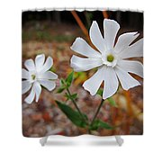 Evening Lychnis Shower Curtain