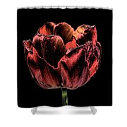 Evening Red Shower Curtain