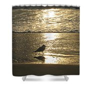 Evening Stroll For One Shower Curtain