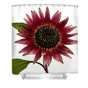 Evening Sun Sunflower 2 Shower Curtain