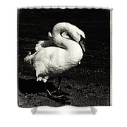 Evening Swan Shower Curtain
