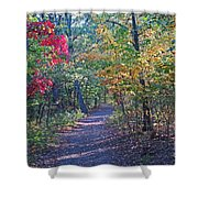 Evening Walk Thru The Woods Shower Curtain