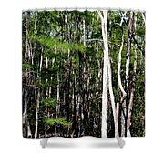 Everglade Magic Shower Curtain
