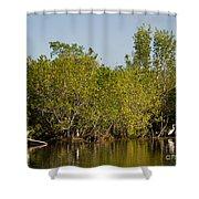 Everglades'  Egrets Shower Curtain