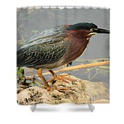 Everglades Green Heron Shower Curtain