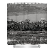 Everglades Panorama Bw Shower Curtain