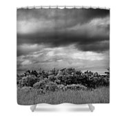 Everglades Storm Bw Shower Curtain