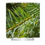 Evergreen Dream By Jrr Shower Curtain