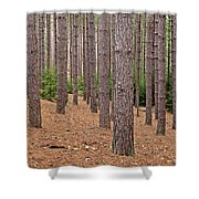 Evergreen Infinity Shower Curtain