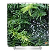 Evergreen Rain Shower Curtain
