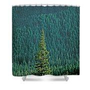 Evergreen Trees Shower Curtain
