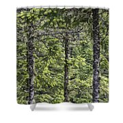 Evergreens Shower Curtain