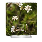 Everlasting Shower Curtain by Christina Rollo