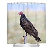 Everything Is Beautiful Maybe Shower Curtain