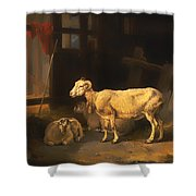 Ewe And Lambs Shower Curtain