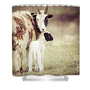Ewe And Young Shower Curtain