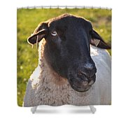 Ewe Bet I'm Cute Shower Curtain