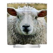 Ewe's Just Fluffy Shower Curtain