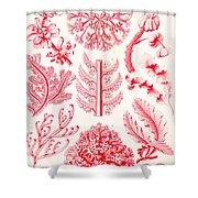Examples Of Florideae From Kunstformen Der Natur Shower Curtain by Ernst Haeckel