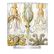 Examples Of Various Cephalopods Shower Curtain